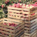 キルギス 田舎のリンゴ果樹園ホテル